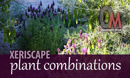 good combinations of xeriscape plants